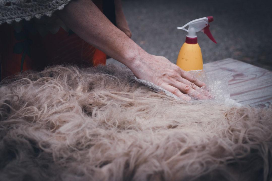 Schaffell wird von Hand leicht verfilzt